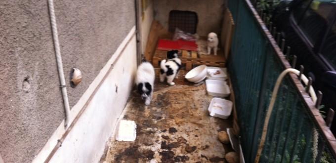 Acri-I tre cuccioli abbandonati